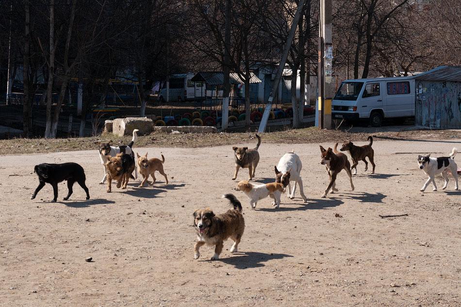 Опустевший Брянск захватили стаи бездомных собак