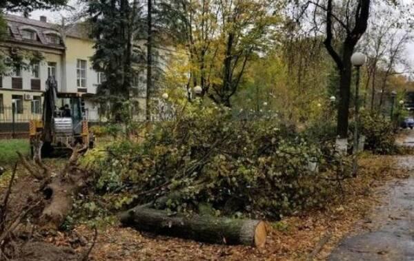 Деревья срубили в сквере Камозина в Бежицком районе Брянска