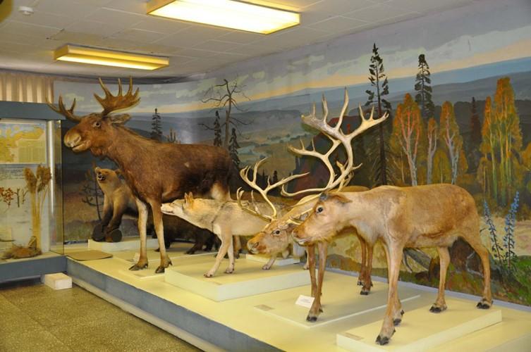Брянские чиновники поддержали закон о музеях