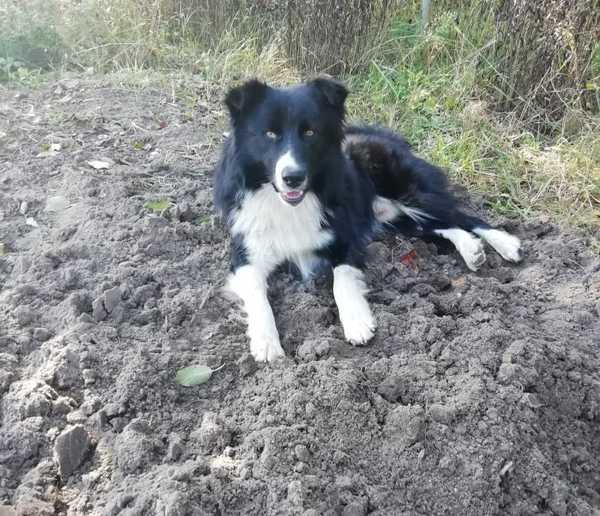 Брянец, прошедший Чечню, зверски издевается над собакой