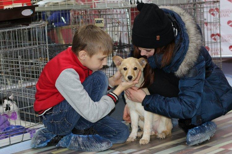 Брянцы могут помочь бездомным животным