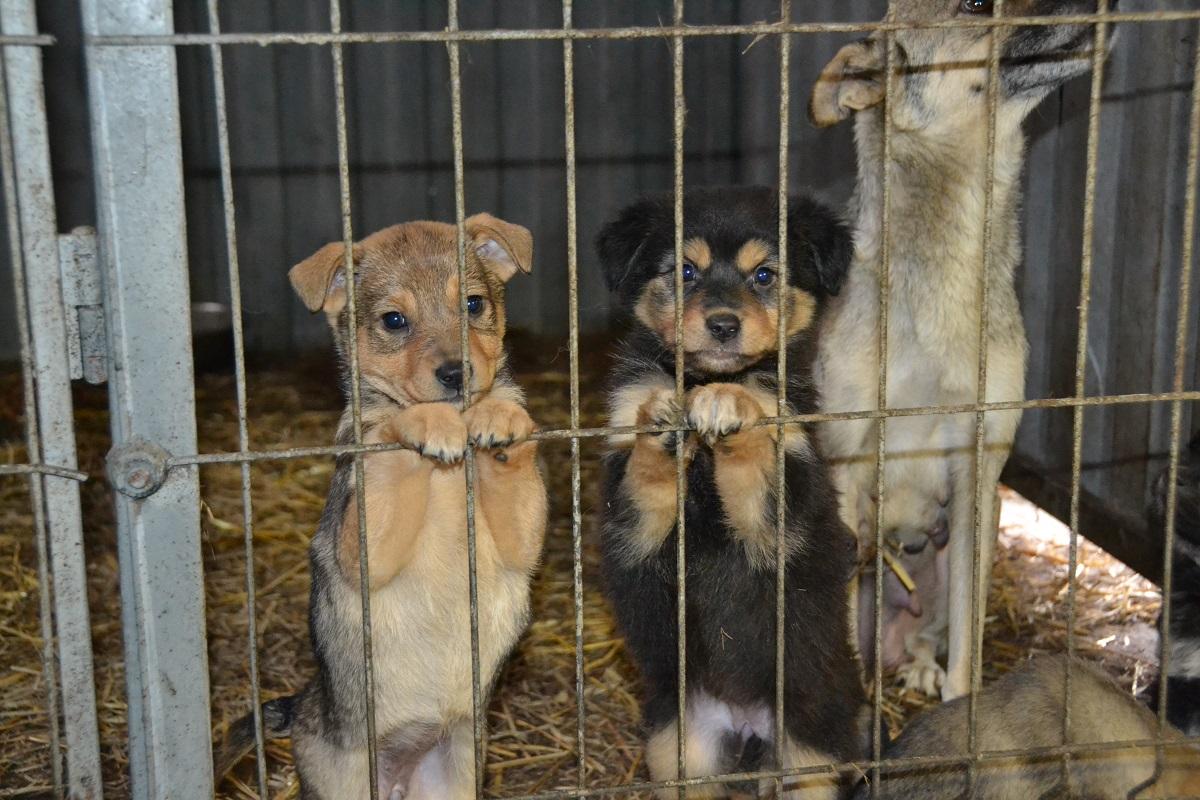 В Брянске 32 животных из приюта на Почтовой улице нашли новых хозяев