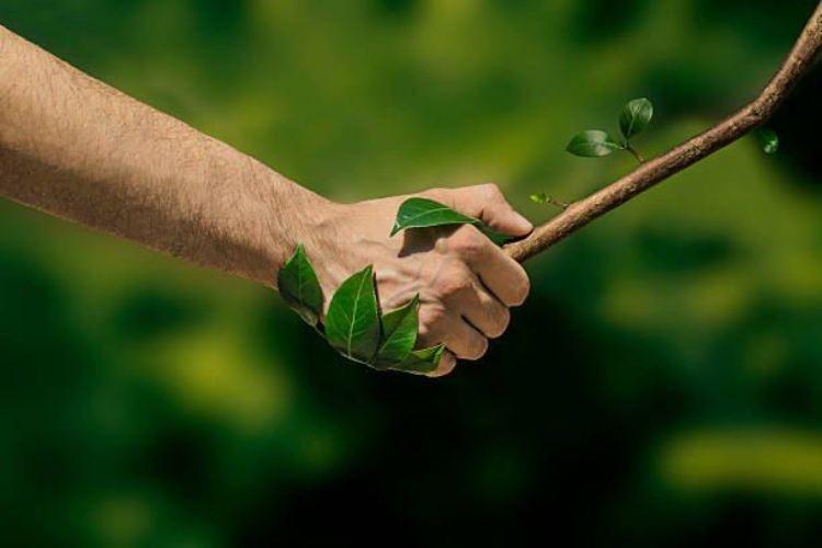 В Брянске объявлен конкурс на лучшее фото и селфи в лесу