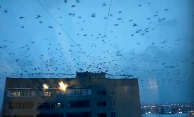 Грачи захватили Брянск и атаковали дом
