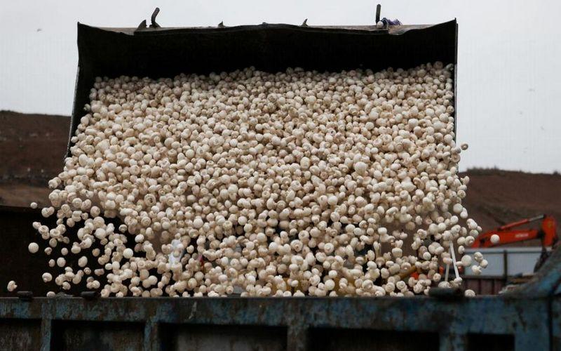 Подозрительные грибы пытались пересечь брянскую границу