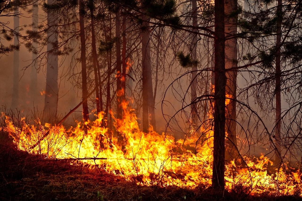 За сутки под Брянском произошли 6 лесных пожаров