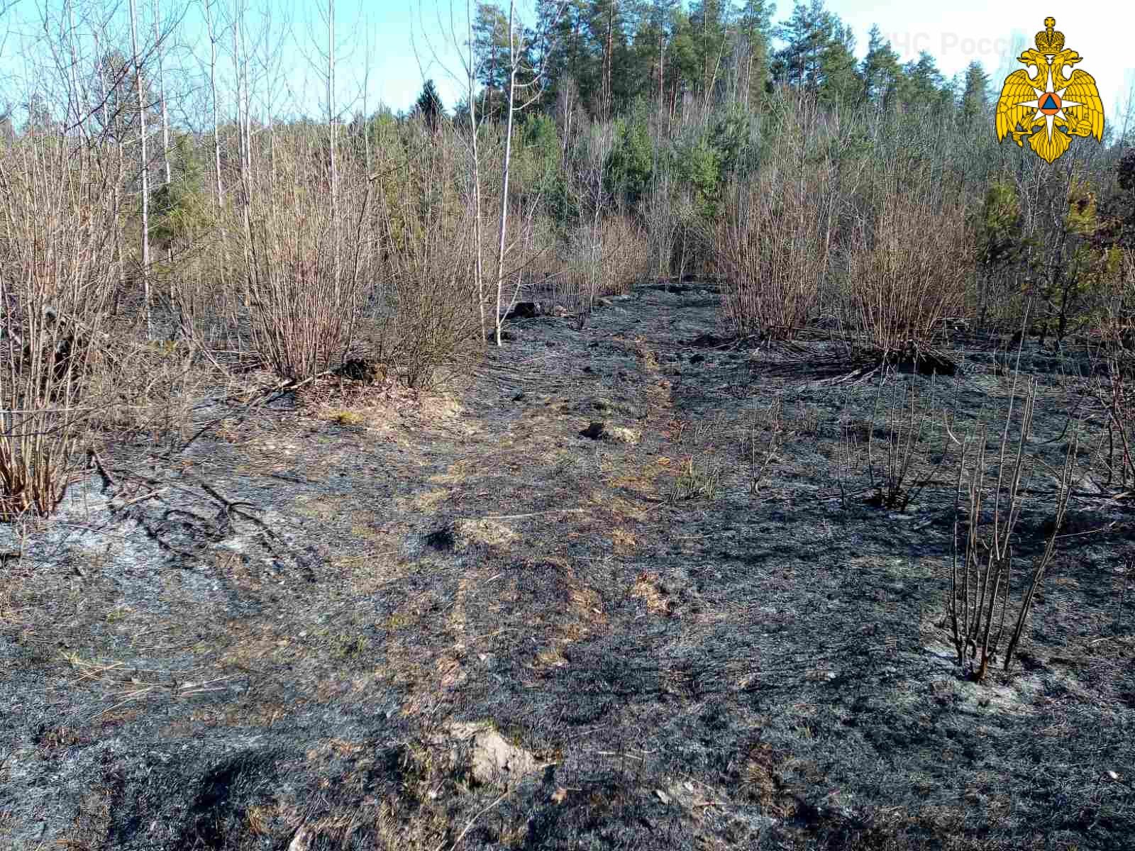 В Навлинском районе пылала сухая трава