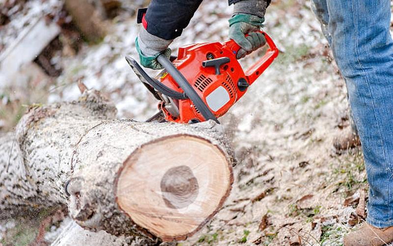 Жители Брянска бьют тревогу из-за вырубки деревьев на улице Ромашина