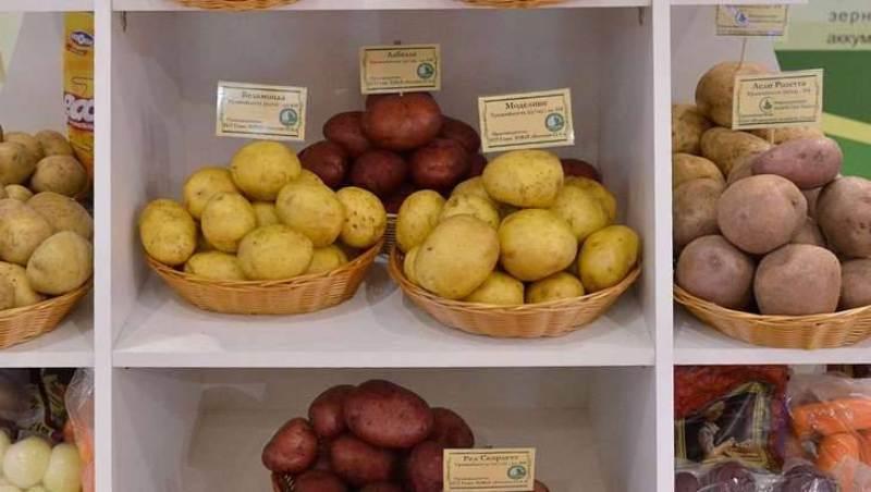На Брянщине начнут выращивать экологически чистый картофель