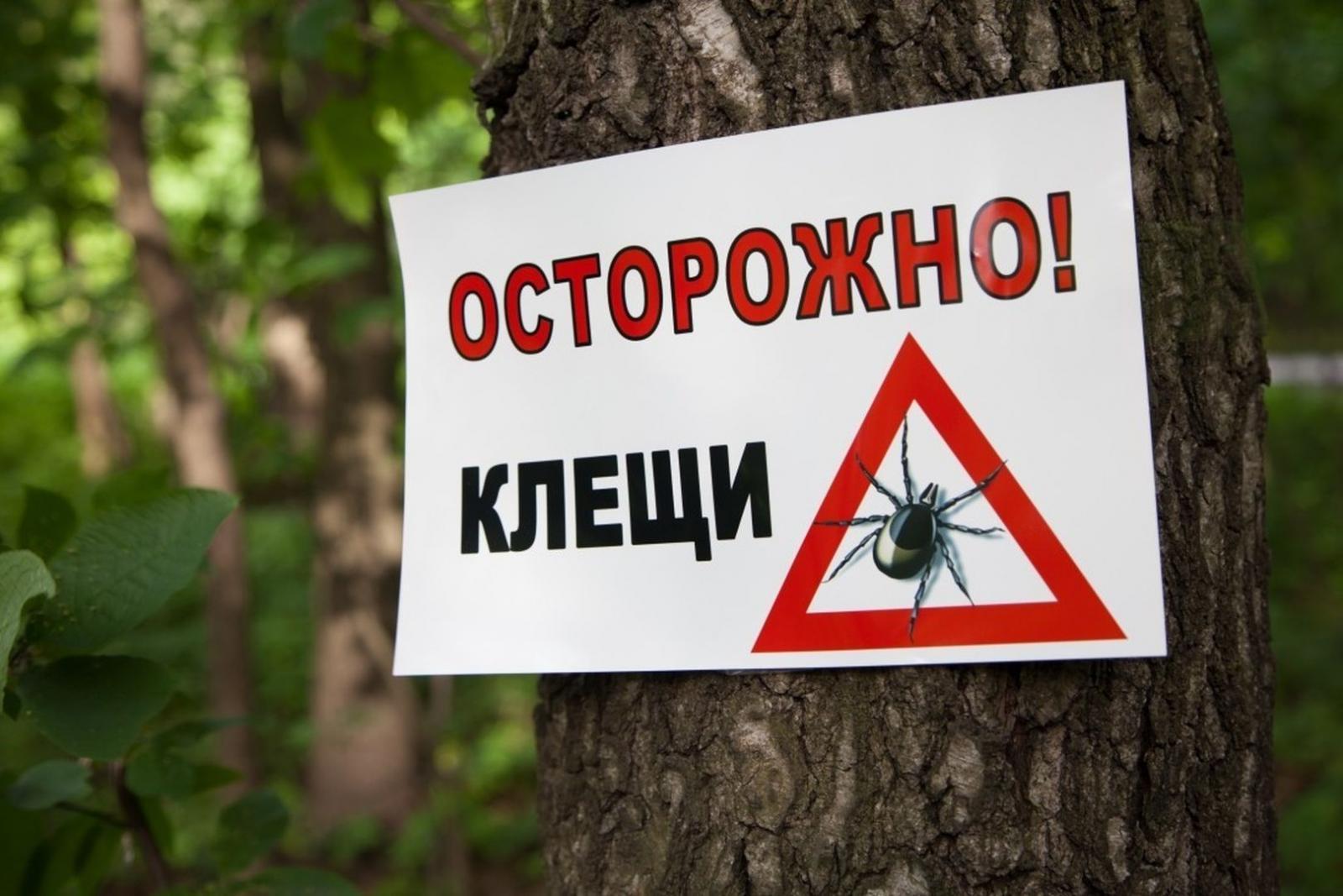 В Брянске кровожадные клещи покусали 125 детей