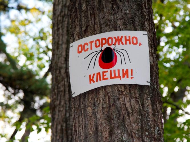 Названы самые опасные Брянские районы, где нападают озверевшие клещи