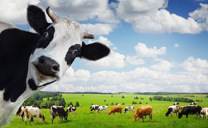 В Новозыбковском районе набирает обороты производство молока