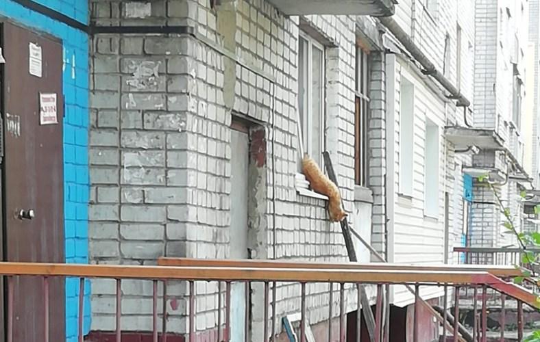 В Брянске в оконном проеме застрял кот