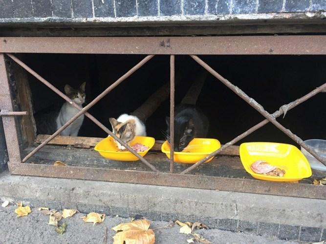Службы ЖКХ обязали оставлять лазейки для кошек в подъездах многоэтажек