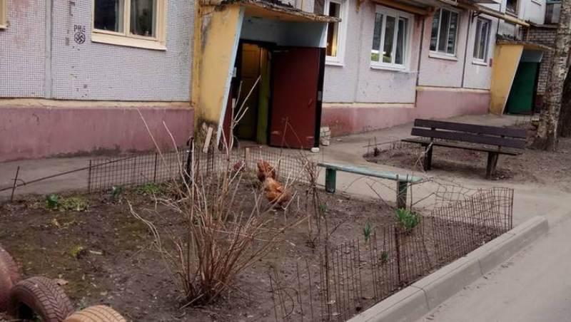 В Брянске пенсионерка превратила свою квартиру в курятник