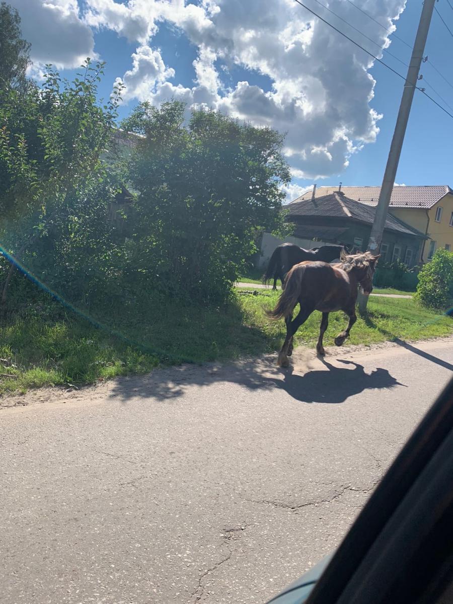 В Брянске отчаянные лошади бросаются под колеса машин