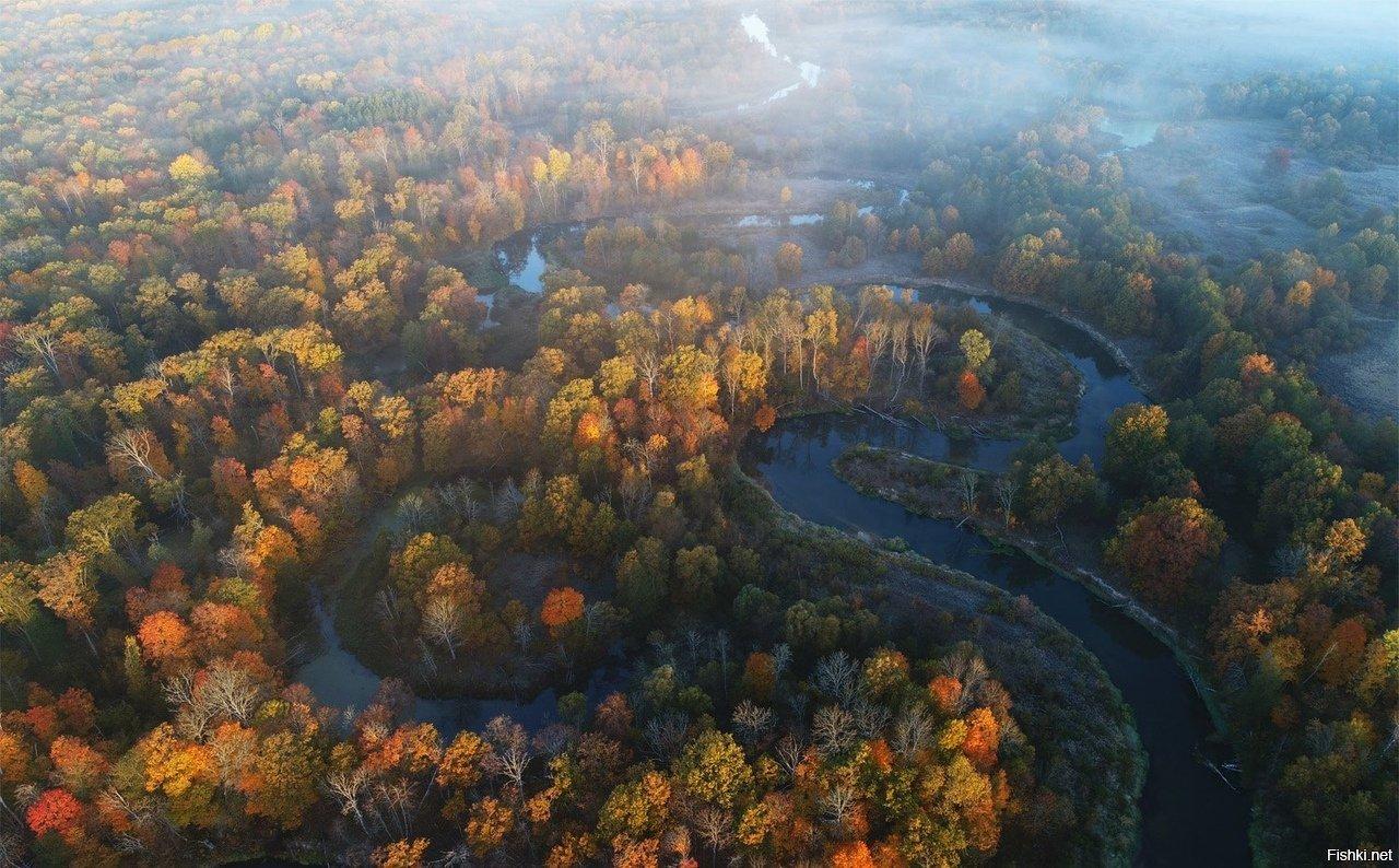 На переоснащение лесохозяйства Брянской области в 2021 году выделили 40,7 млн рублей