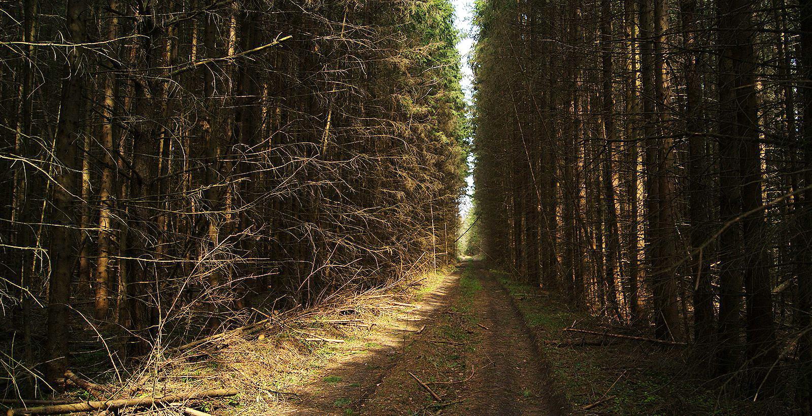 В Брянской области утвердили программу по благоустройству лесов на пригородных территориях