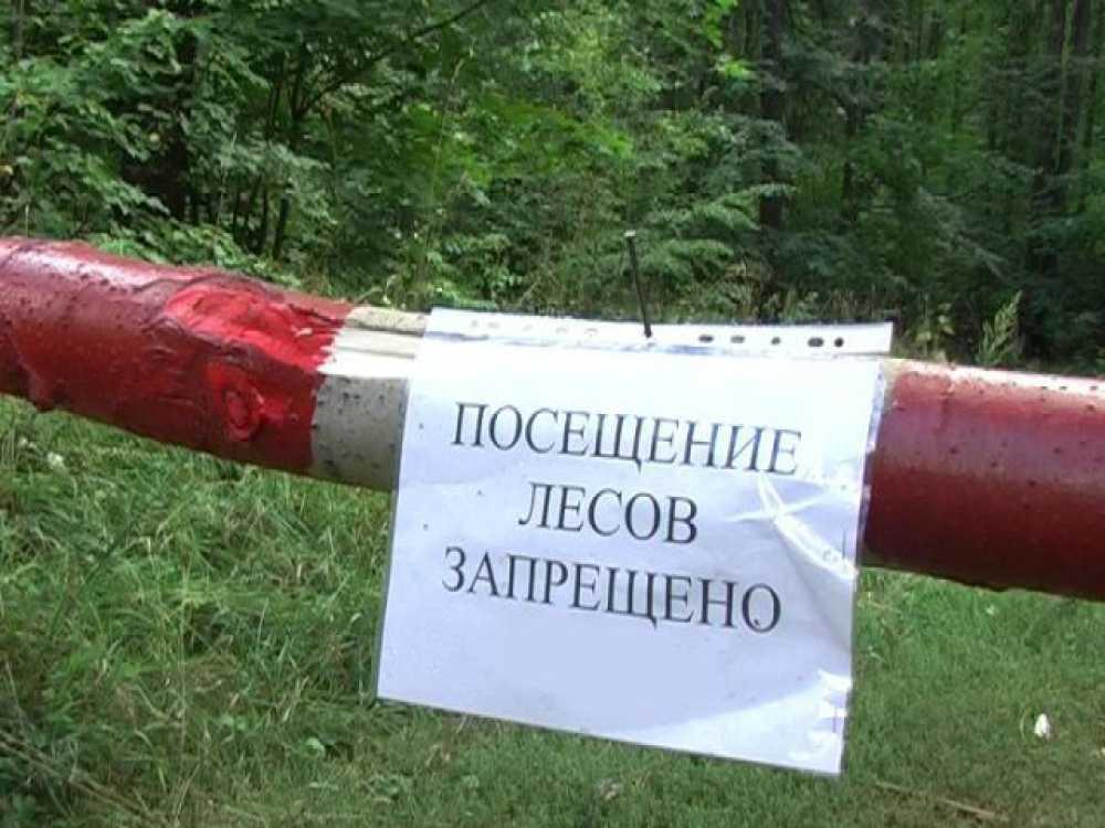 Для брянцев ввели ограничение на посещение лесов