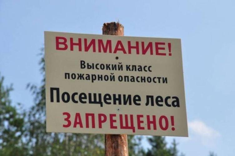 На майские праздники брянцам могут запретить походы в лес