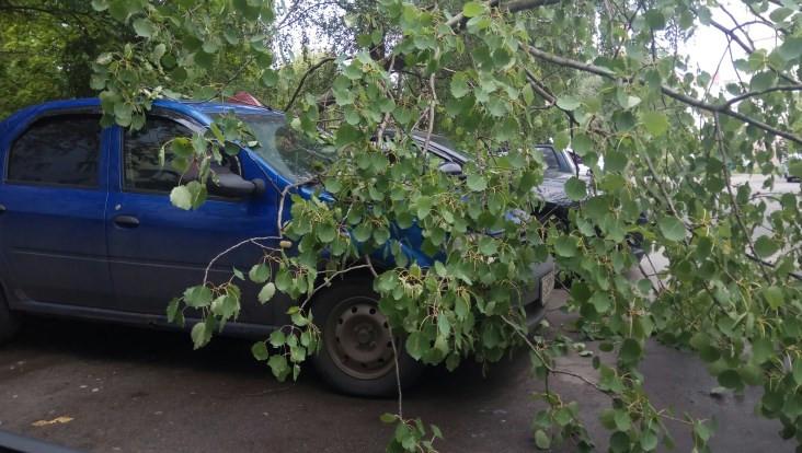 В Брянске на легковушку рухнуло дерево