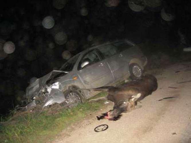 Водитель авто врезался в лося: ранен годовалый ребенок
