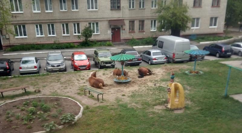 В Брянске цыганские лошади отобрали у детей песочницу