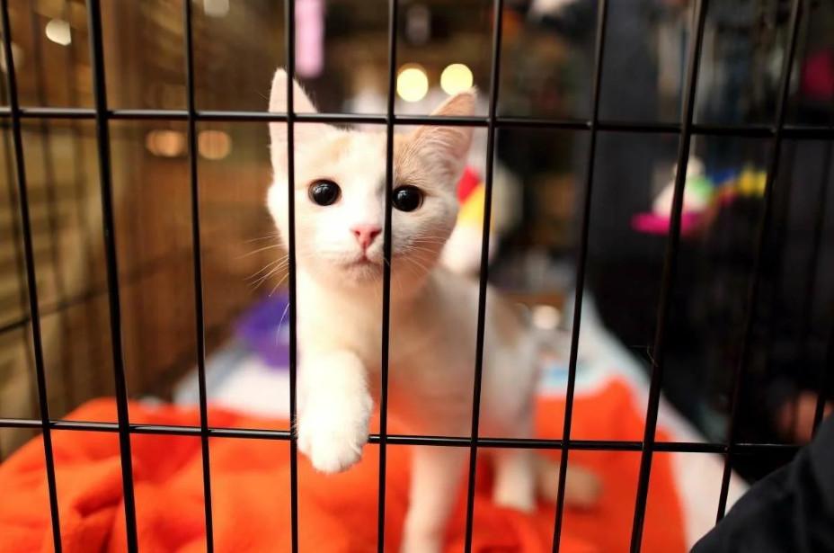 Брянский мини-приют для животных просит помощи
