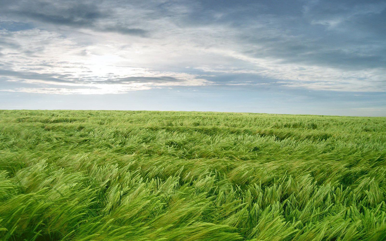 Завтра в Брянске обещают сильный ветер