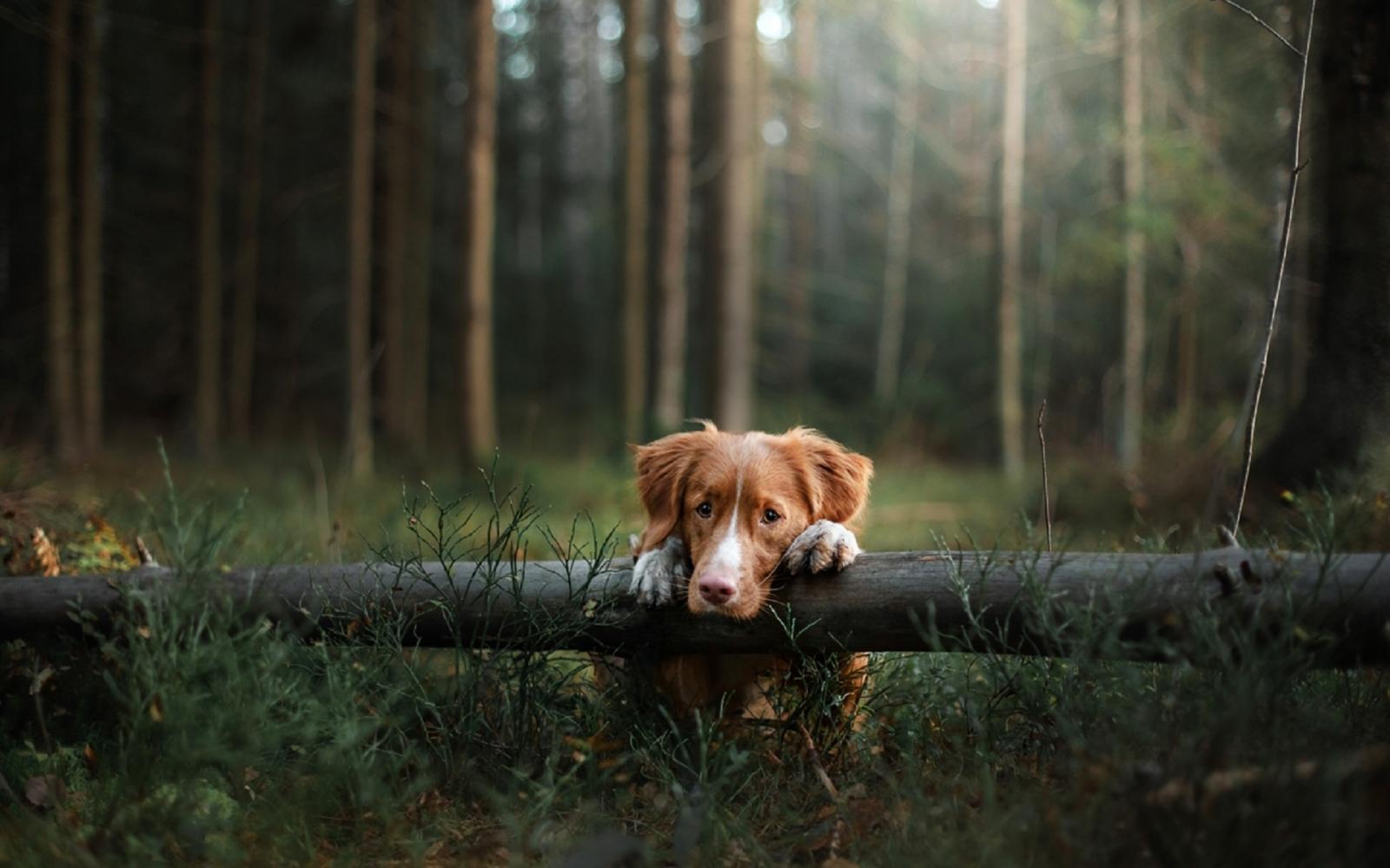 Брянцам рассказали, как не потеряться в лесу