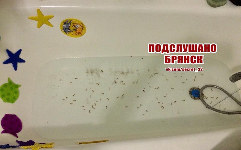 У жителя Брянска из вентиляции в ванной посыпались опарыши