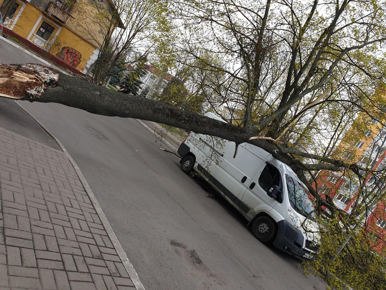 В Фокинском районе Брянска на машину рухнуло дерево