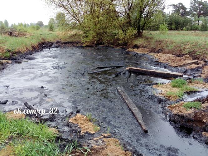 В Брянске засыпали озеро, в котором погибли собаки