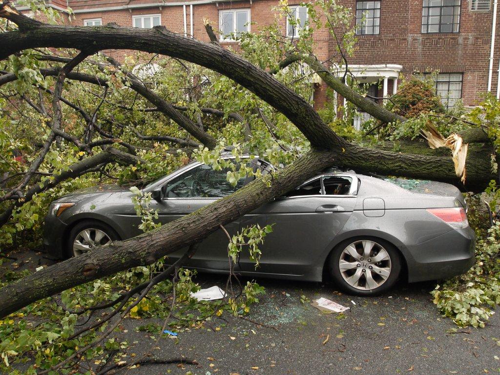 В Клинцах на легковушку рухнуло дерево