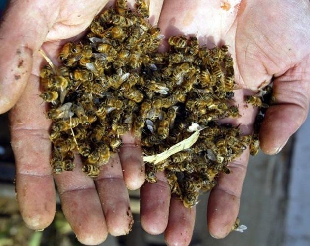 В Севском районе погибли пчелы