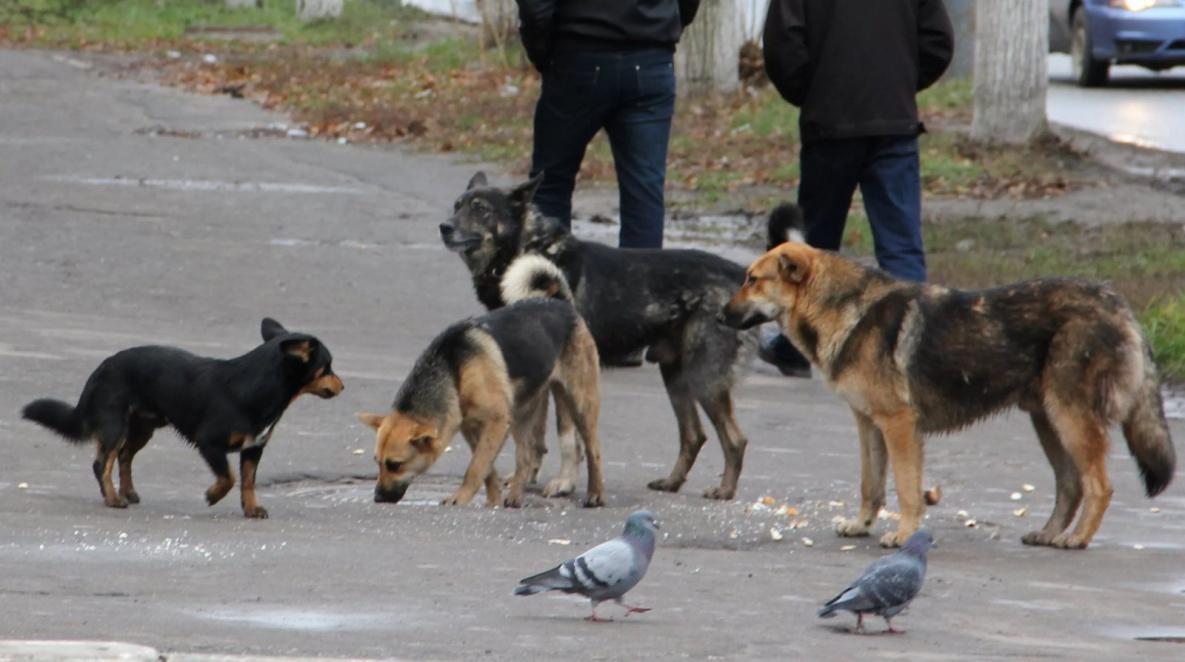 В Брянске девушка пригрозила отравить стаю бродячих собак