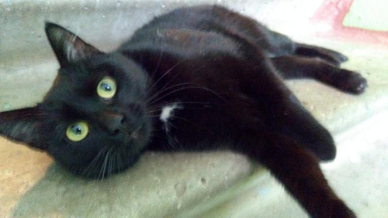 Брянские живодеры расстреляли из пневматики кота