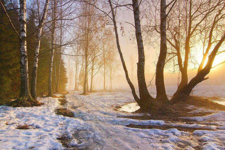 Январь в Брянской области будет аномально теплым