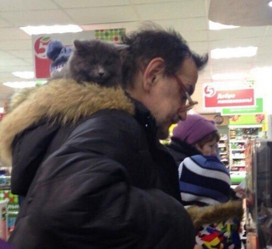 Брянцы умиляются спящим котом у покупателя на шее