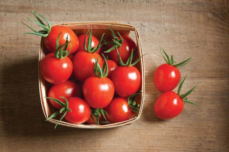 Брянские специалисты нашли в турецких томатах личинки вредителя