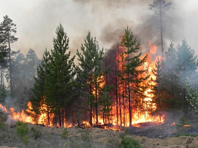 В Навлинском районе произошел лесной пожар
