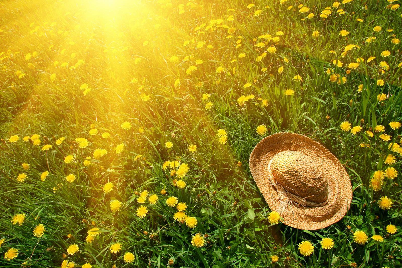 Завтра в Брянске ожидается +26ºC