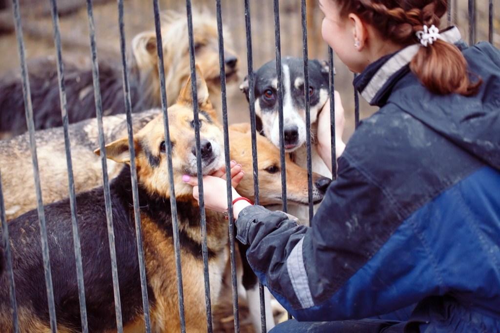 Мэр Брянска Макаров предложил расширить приют для бродячих собак на улице Почтовой