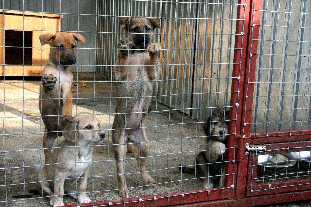 В Брянске временный приют для бездомных животных начал свою работу