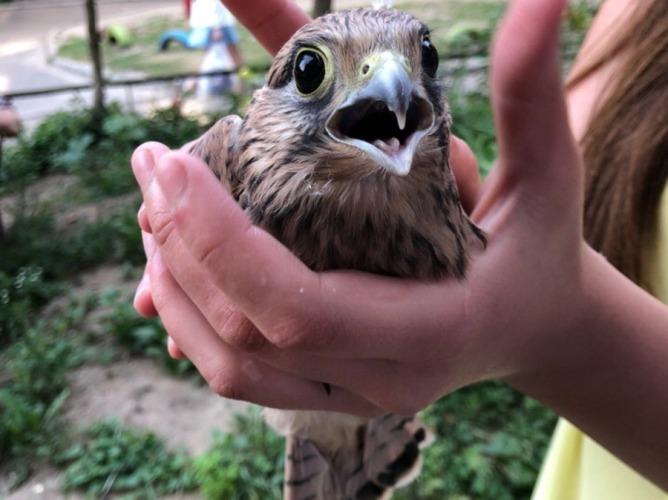 Брянцы захотели приютить птенца хищной птицы