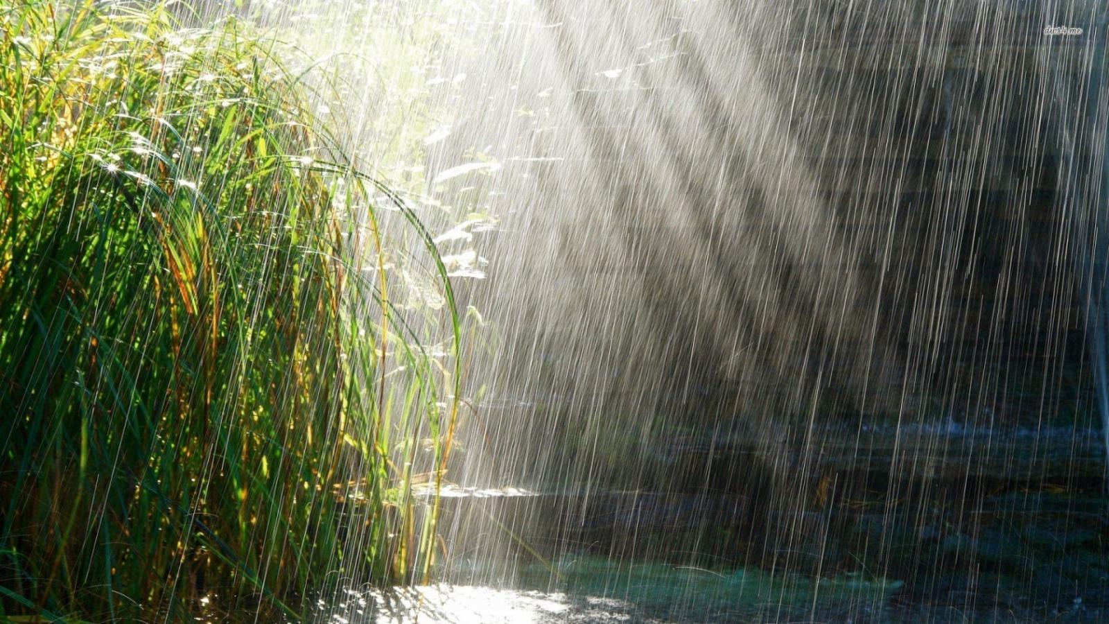 Завтра в Брянске будет холодно и дождливо