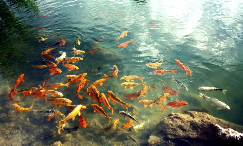 Стала известна причина гибели рыбы в брянских водоемах