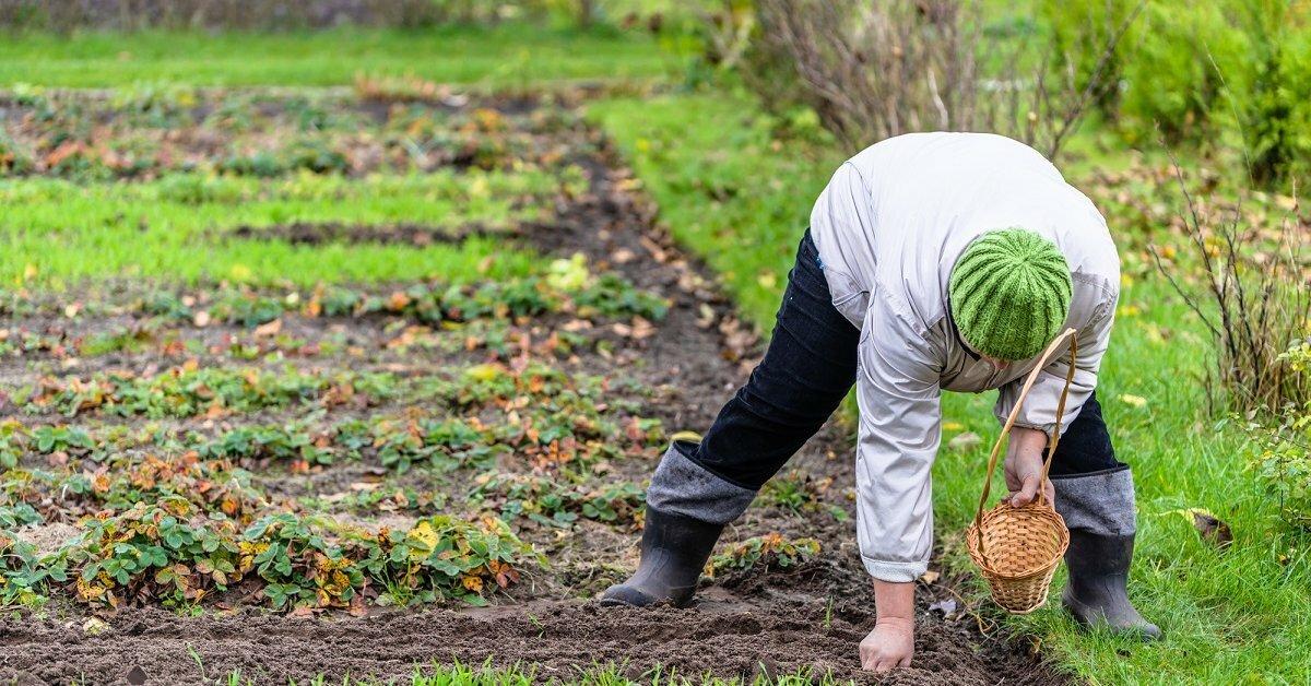 Брянским огородам угрожает серьезная опасность