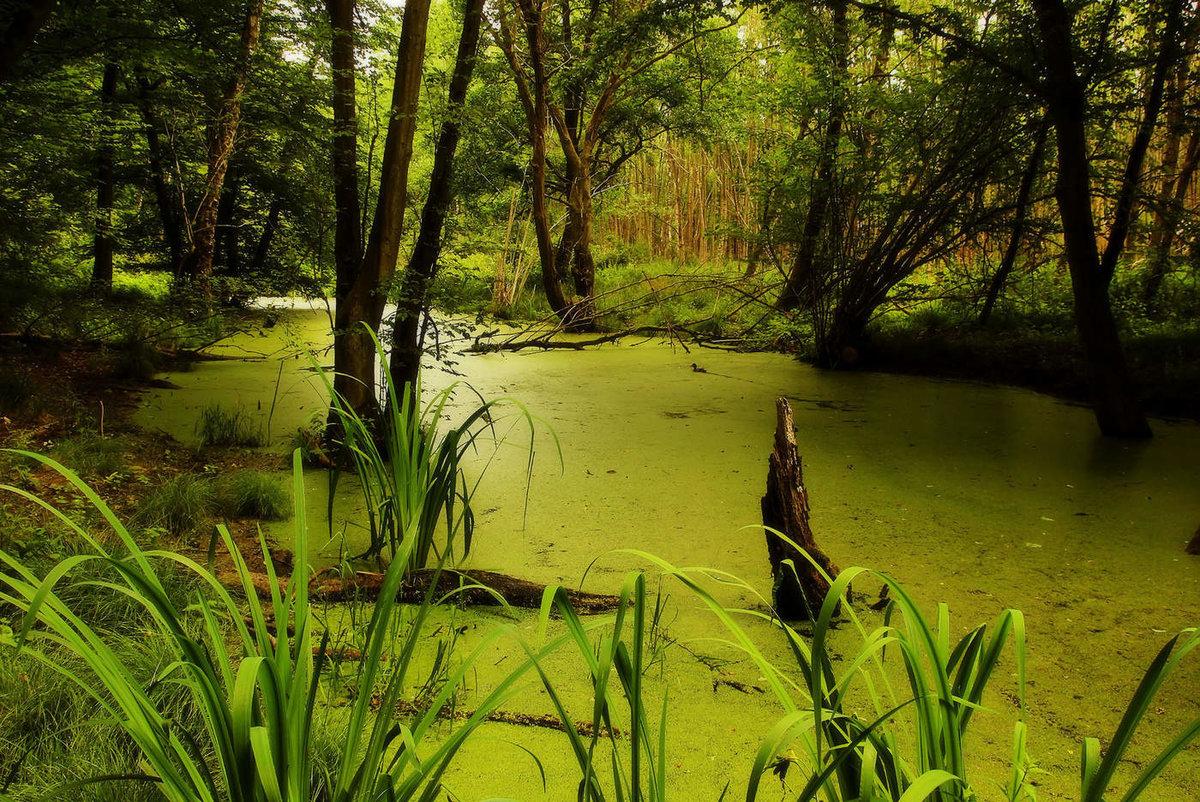 Брянские ребята спасли провалившуюся в болото женщину