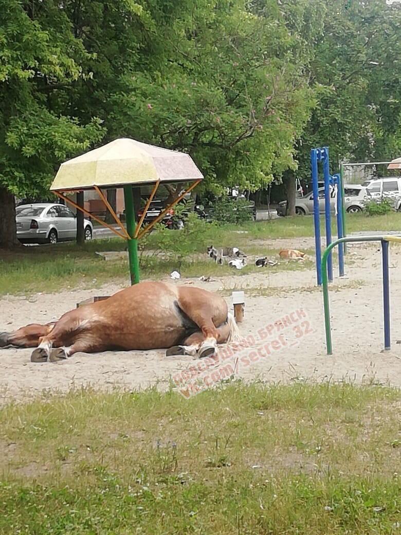 Храпящие лошади и собаки захватили двор в Брянске
